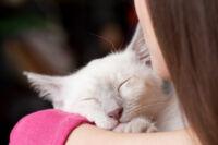 Egy macskaőrült csakis macskás ágytakaróval alakíthat ki stílusos környezetet!