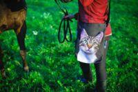 Dobd fel az őszi szettedet macskás táskával!