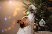 Egy állatbarát fenyőfájáról nem hiányozhatnak karácsonyi gömbök!