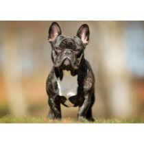 Francia Bulldog mintás törölköző