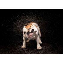 Angol Bulldog mintás törölköző 2