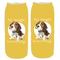 Beagle zokni - everything