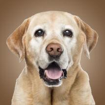 3D Labrador mintás táska - sárga