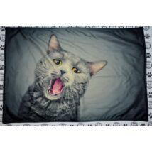 Macskás takaró