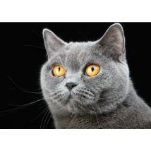 Brit Rövidszőrű macskás törölköző (70*100 cm)