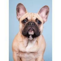 Francia Bulldog mintás törölköző 4