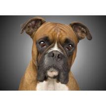 Boxer mintás törölköző (70*100 cm)