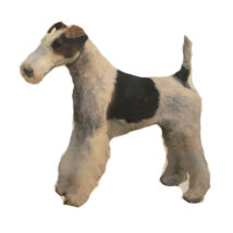 Foxterrier matrica