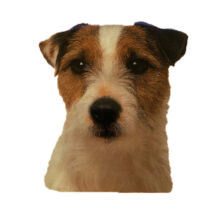 Jack Russell Terrier matrica