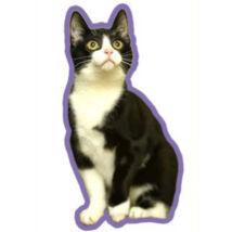 Fekete fehér macska autóillatosító