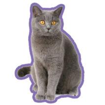 Brit Rövidszőrű macskás autóillatosító