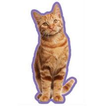 Vörös macskás autóillatosító
