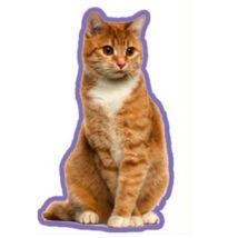 Vörös macskás autóillatosító 2