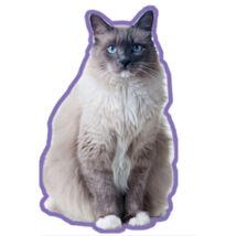 Ragdoll macskás autóillatosító