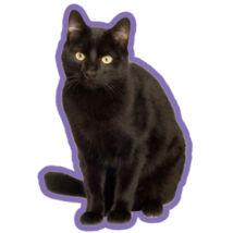 Fekete macska autóillatosító