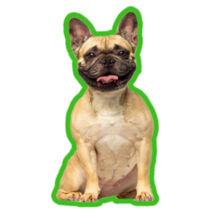 Francia Bulldog autóillatosító - fawn