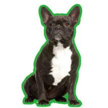 Francia Bulldog autóillatosító