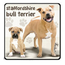 Stafforshire Bull Terrier hűtőmágnes