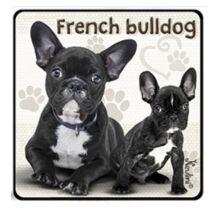 Francia Bulldog hűtőmágnes