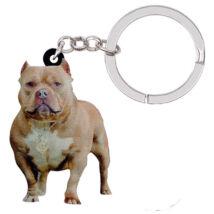 Amerikai Pit Bull Terrier kulcstató