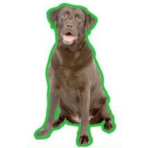 Labrador autóillatosító - csoki