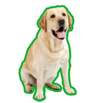 Labrador autóillatosító