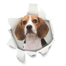 Beagle 3D matrica 2