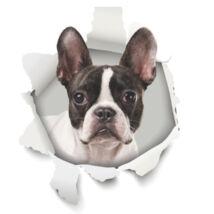 Boston Terrier 3D matrica