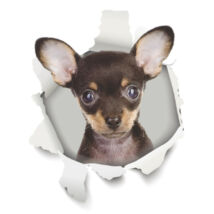 Chihuahua 3D matrica