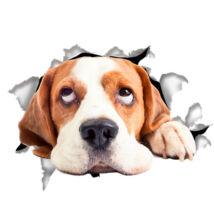 Beagle 3D matrica