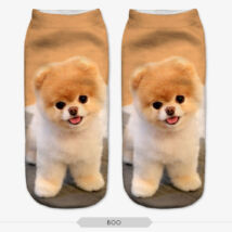 Pomerániai törpe spicc zokni 2