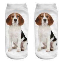 Beagle zokni