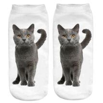 Brit macska zokni