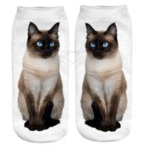 Sziámi macska zokni