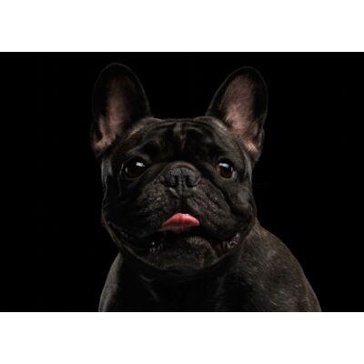 Francia Bulldog mintás törölköző 2