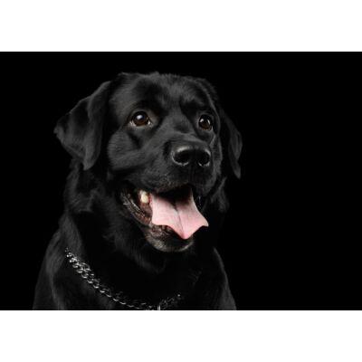 Labrador mintás törölköző