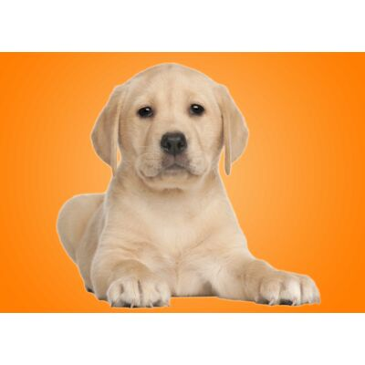 Labrador mintás törölköző 2