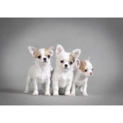Chihuahua mintás törölköző 2