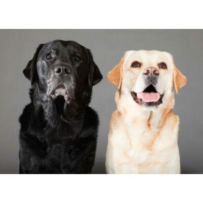 Labrador mintás törölköző 3