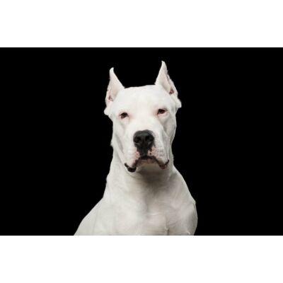 Argentin dog mintás törölköző