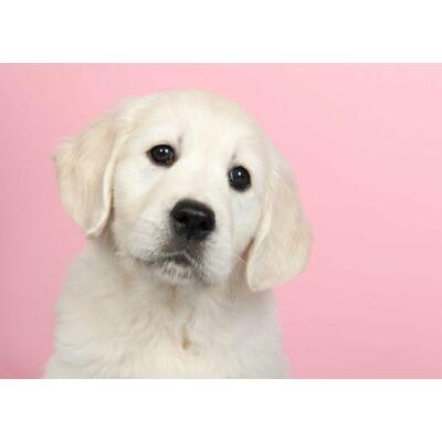 Labrador mintás törölköző rózsaszín
