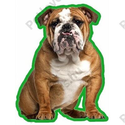 Angol Bulldog autóillatosító