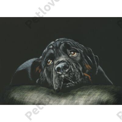 Rottweiler mintás törölköző (70*140 cm)