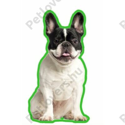 Francia Bulldog autóillatosító -  fekete fehér