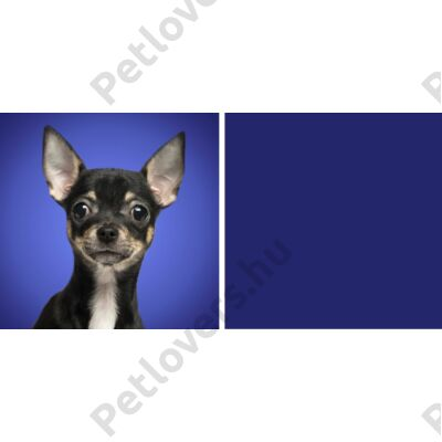3D Chihuahua hátitáska 2