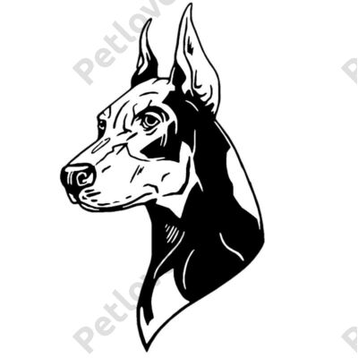 Doberman matrica