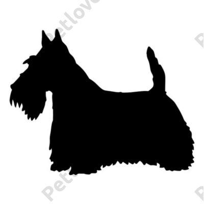 Skót Terrier matrica