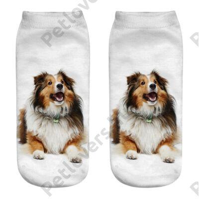 Collie zokni