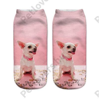 Chihuahua zokni