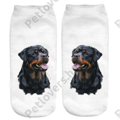 Rottweiler zokni 2